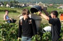 Vendanges 2013 en Bourgogne